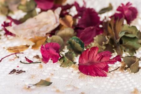 Bleeding-heart flower in vase with dry flower background Stock Photo - 22739367