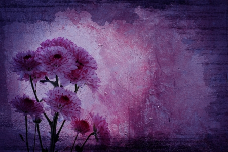 wll: Vintage purple Chrysanthemums branch  on a grunge cement background