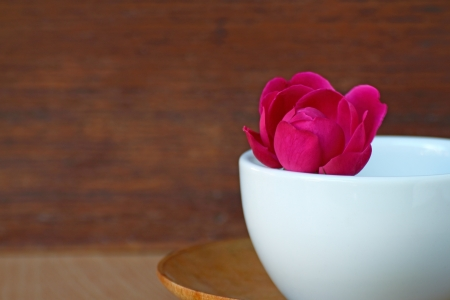 mental object: Still life red rose in white coffee cup for decoration