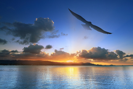 silhouette seagull flying home at sunset  photo