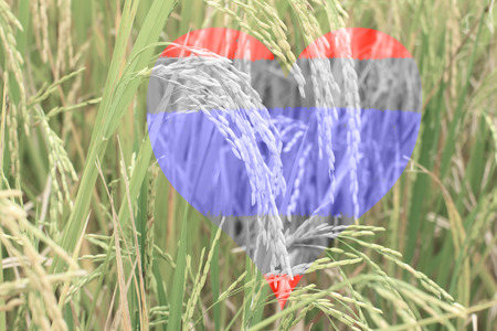 Rice field with Thai flag in herat shape photo