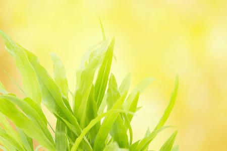 ramantic: Green grass refreshment in morning sun light