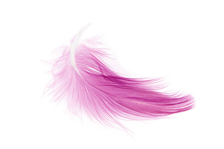 Pink feather on white background Stock Photo