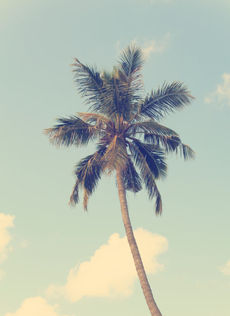 Vintage coconut palm tree with blue sky background photo