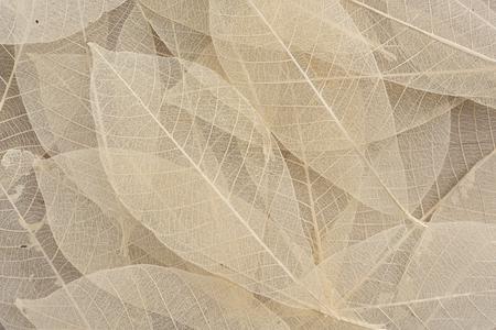dry leaf: Dry leaf pattern on wood background