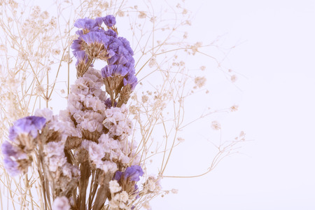 biomasa: Beautiful Lilac dry flowers bouquet isolated on white background,retro effect