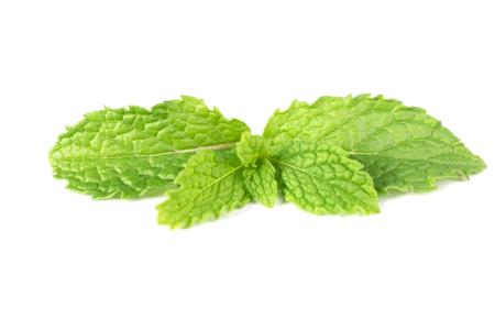 Fresh green mint leaf isolated on white background Stock Photo