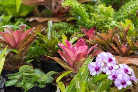 Beautiful Bromeliad in green garden outdoors Stock Photo