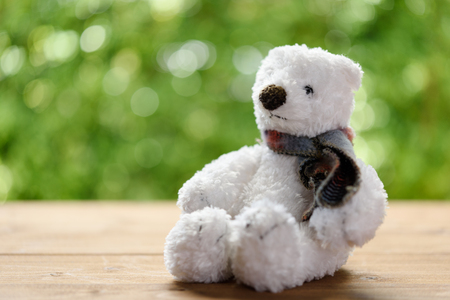old desk: White puffy teddy bear toy sit alone on wood table with green blurred background Stock Photo