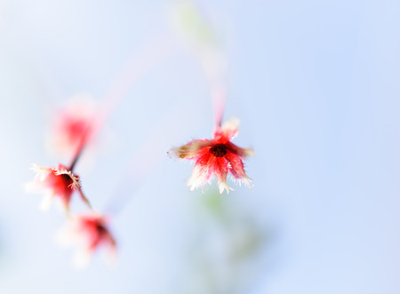 Small beautiful red flowers with blue sky background Imagens