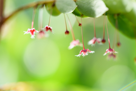 Small beautiful red flowers with green leaf background