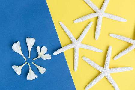 Flat lay beautiful Frangipani flowers and star fish on yellow,blue  background