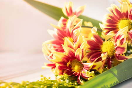 Beautiful red yellow fresh chrysanthemum flowers boquet on white wooden background,sofot focus Banque d'images