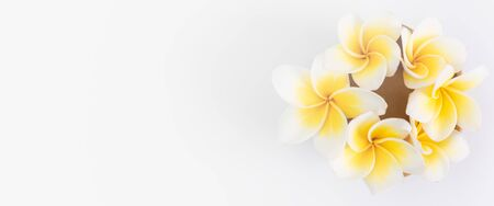 Beautiful yellow Plumeria,Frangipani flowers set in bowl  over white background,top view with space for text