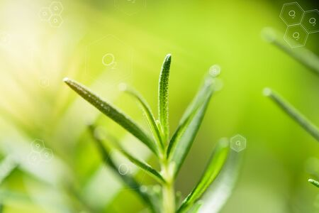 Natural fresh green leaf and oxygen icon over blurred background,enviroment air purify concepts