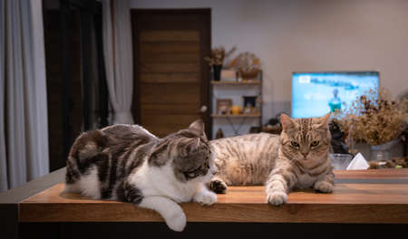 Cute tabby cat sit and relax on wooden counter in living room in night time