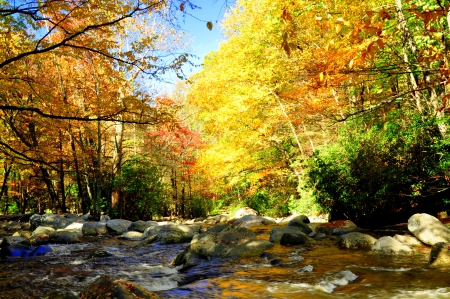 The Pigeon River, near Gatlinburg, Tennessee, is lined with trees