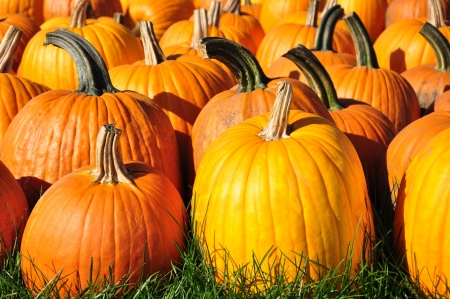 Pumpkins on display for sale  Stock Photo - 16355233