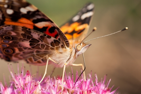 A moth pollinating a flower