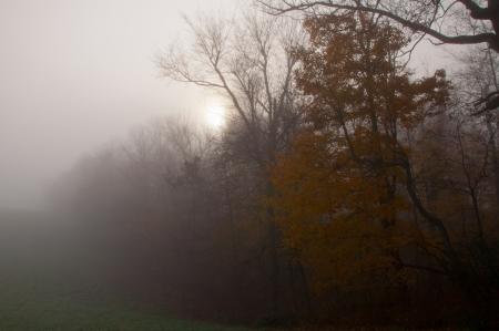 dimly: The sun shines dimly through morning fog