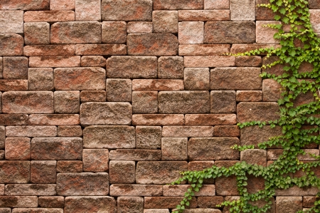 ivy wall: English ivy grows up a rock wall  Stock Photo