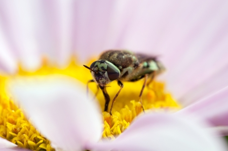 A small bee pollinates a flower
