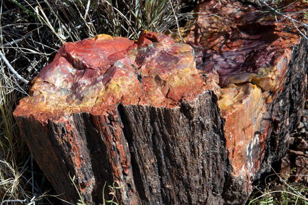 petrified fossil: Petrified logs in Petrified Forest National Park.