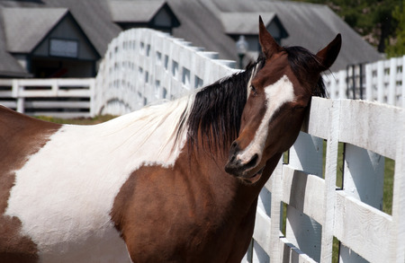A horse scratching his head on a fence.