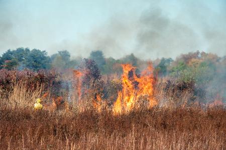 Brush fire 版權商用圖片