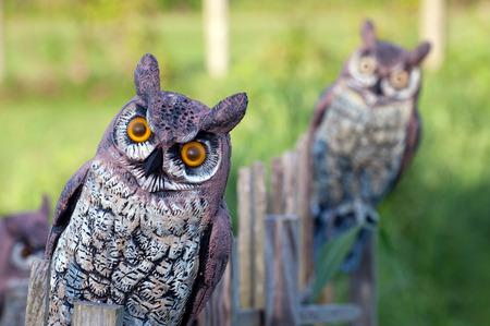 Fake uilen worden gebruikt om ongedierte uit de buurt van een tuin schrikken.