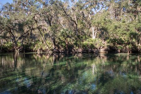 blue springs state park 版權商用圖片