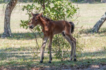 Newborn colt on wobbly legs
