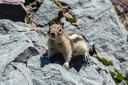 a chipmunk begs hikers for food.