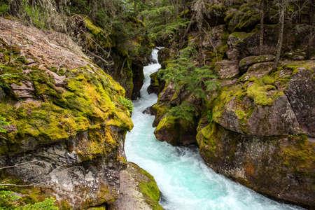 Avalanche Creek in Glacier National Park cascades through rocks.