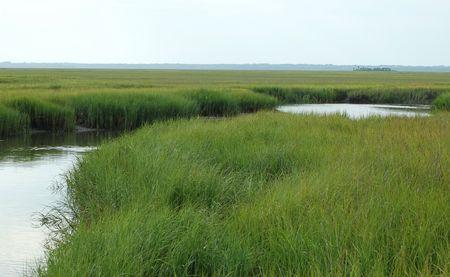 barrier island: Marsh grass on the bay side of a barrier island along the South Carolina coast.