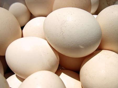 gallina con huevos: Varios huevos de gallina en una cesta