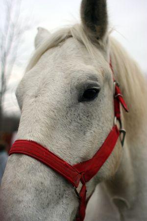 Horse portrait Stock Photo - 2508505