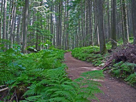 A trail slopes through a lush forest.