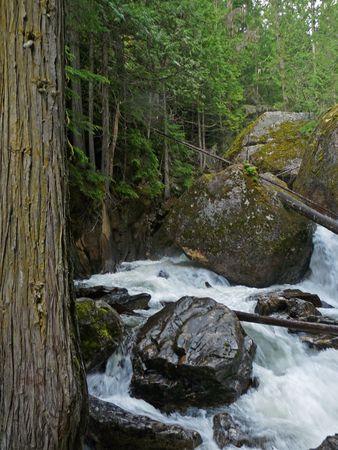 A stream flows down a peaceful mountain.