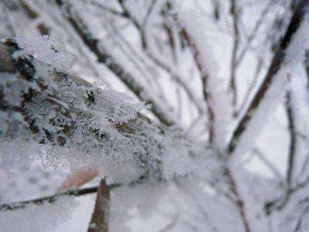 Looking down a frosty tree.