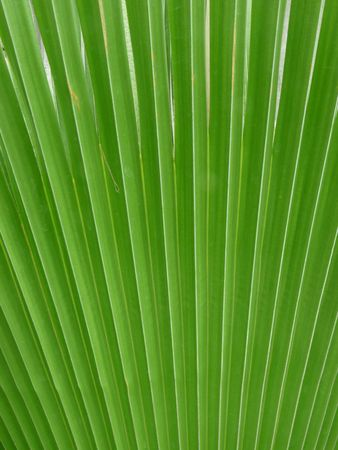 A green frond background