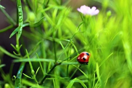 A ladybug hurries away