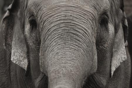 An elephant approaches