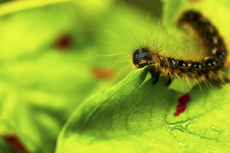 A caterpillar finds a tasty snack
