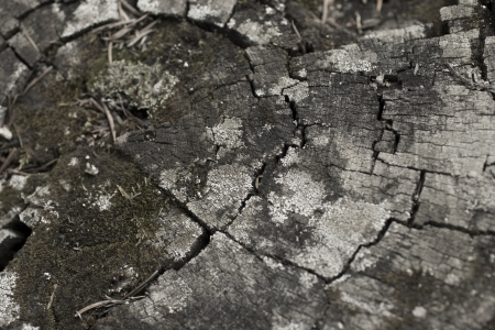 a background of a cracked tree stump