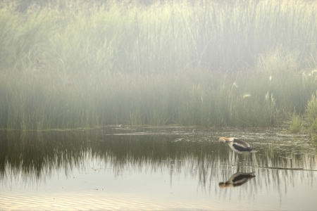 A small crane wakes to find a morning mist