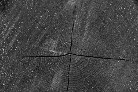 A black and white background of tree rings Stock Photo