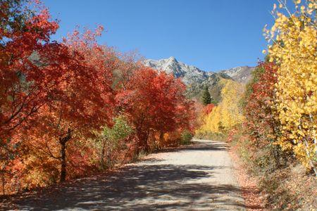 Fall colored road