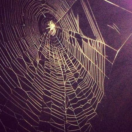 Massive spider waiting for dinner