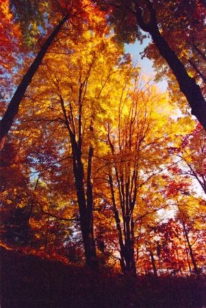 Follaje de oto�o ilumina un entorno arbolado octubre en el suroeste de Michigan Foto de archivo